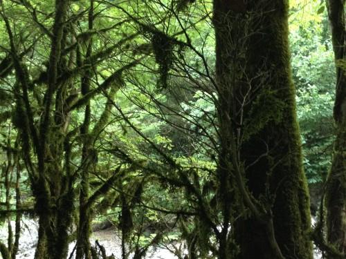 Шикарные таинственные леса