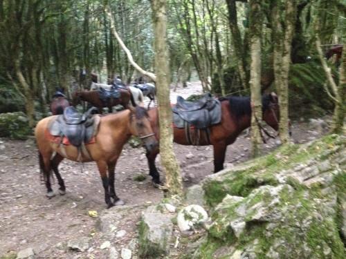 Лошади- умные животные