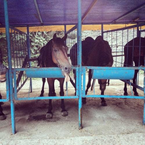 стойло лошади абхазия