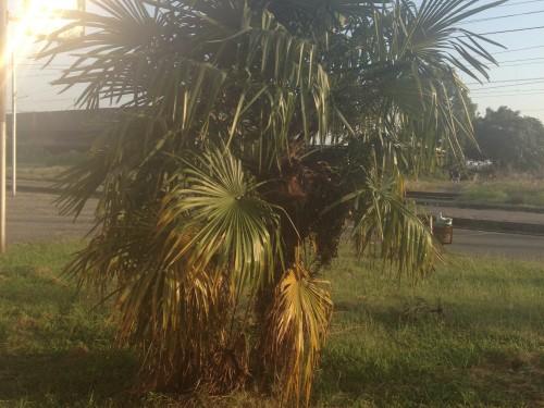 пальма гагра абхазия природа
